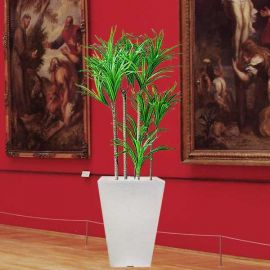 Artificial Plant - Dracaena marginata One Meter Height