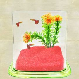 Mini Aqua Gifts Kindly order 2 Days In Advance