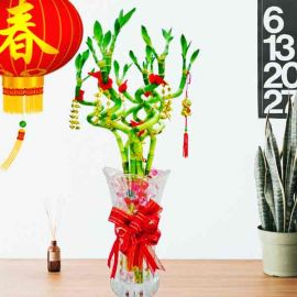 8 Fortune Curly Bamboo