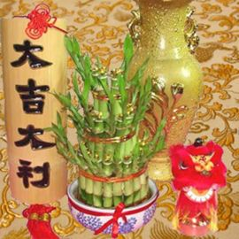Lucky Bamboo with Gold Ingot