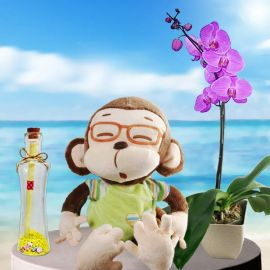 Message-in-a-Bottle, Monkey & Orchid Plant