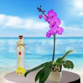 Message-in-a-Bottle & Live Orchid Plant