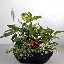 Mixed Indoor Plants In Pot