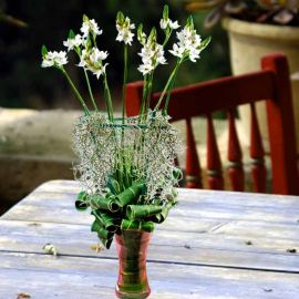Ornithogalum Flowers With Live Hanging Air Plant in Glass Vase
